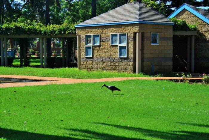 Come eliminare le zanzare in giardino soluzioni di casa for Laghetto giardino zanzare